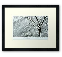 The WHITE Forest of Winter.... Framed Print