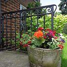 Doorstep Garden by goddarb