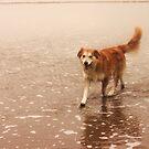 saz pondering through the water by xxnatbxx