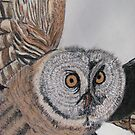 Owl by Suzanne Buckland