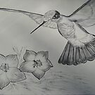 Hummingbird by Suzanne Buckland