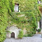 Ivy in Ravello by Christine Wilson