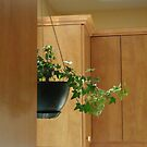 Kitchen Geometry - with Ivy by goddarb