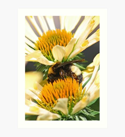 Sandwiched Bumblebee  (vertical) Art Print