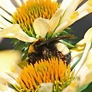 Sandwiched Bumblebee  (vertical) by Bonnie Robert