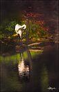 Swan Lake by Ted Byrne