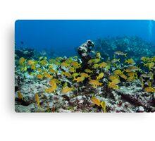 Lots of Yellow fish Canvas Print
