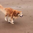 saz running on the beach by xxnatbxx