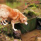 saz jumping into the river by xxnatbxx