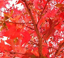 red and green leaved tree by xxnatbxx