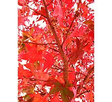red and green leaved tree Photographic Print