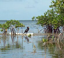 Black bird in the Keys by Sandy Hopkins