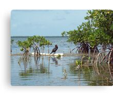 Black bird in the Keys Canvas Print