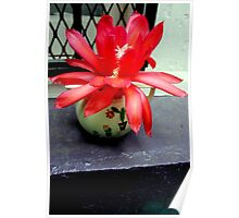 Red Cactus Flowers, Top Step Poster