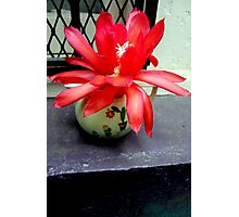 Red Cactus Flowers, Top Step Photographic Print