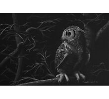 Night Owl - Great Horned Owl Photographic Print