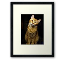 What are you talking about? Framed Print