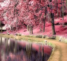 pink by Cat Perkinton