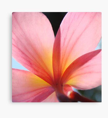 Pink Frangipani Beauty-(Macro) Canvas Print