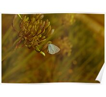 Vintage Style Butterfly Poster