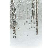 Herd of Deer on a Snowy Day Photographic Print