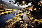 Pathway to Watendlath Tarn, Cumbria. UK by David Lewins