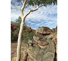rock n tree sculpture - nature's garden Photographic Print