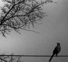 cold song, gray beauty by abigirl
