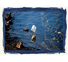 Coyote Point Marina....White Crane Photographic Print