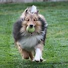 I love to play ball...... by DonnaMoore