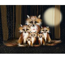 Fox Family Photographic Print