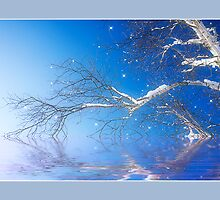 Winter Magic by Trudy Wilkerson