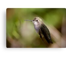 Hummer Portrait Canvas Print