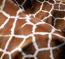 Giraffe Patterns by Tori Snow