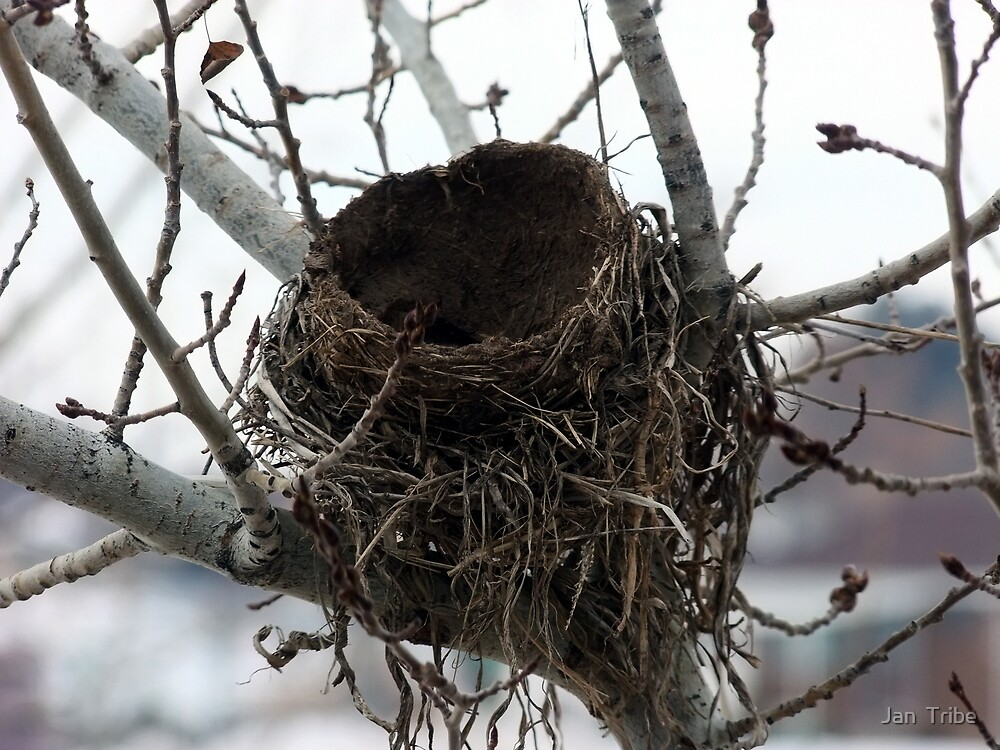 Empty Nest by Jan  Tribe