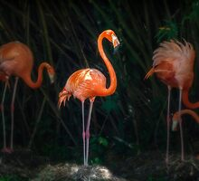 Flamingo Spotlight by Owed To Nature