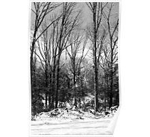 SC Snow Poster