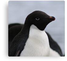 Adelie Penguin Antarctica 1 Canvas Print