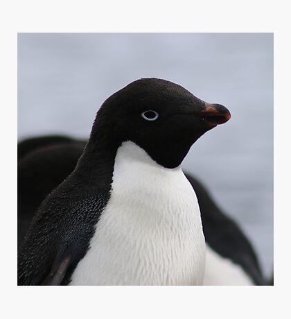 Adelie Penguin Antarctica 1 Photographic Print