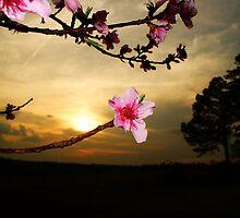 Beautiful flower by idigscarykids