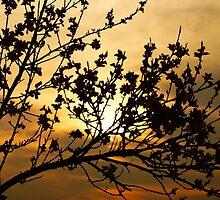 Orange sunset by idigscarykids