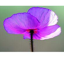 Purple passion Photographic Print