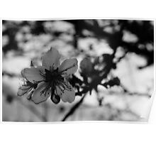 Beautiful peach tree flower Poster