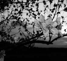 Black and White tree flower by idigscarykids