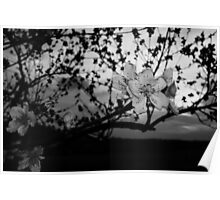 Black and White tree flower Poster