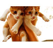 twin kitties Photographic Print