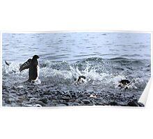 Adelie Penguins Antarctica 2 Poster