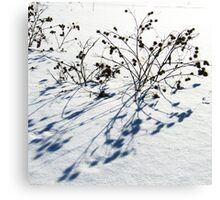 Snow Study No. 1 Canvas Print