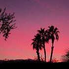 Vivid Desert Sunset by Tori Snow