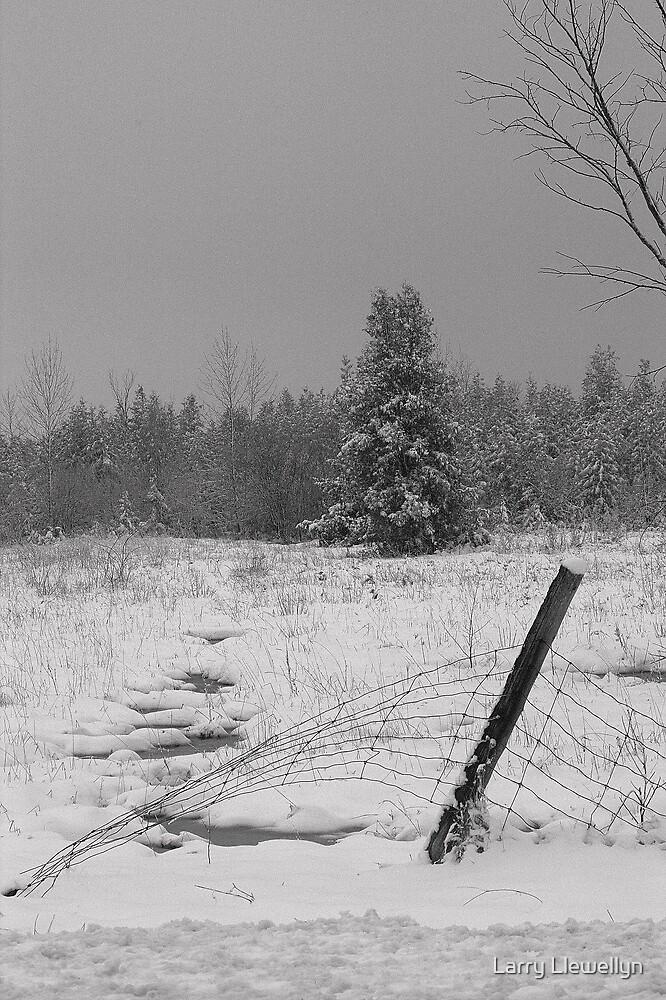 Snowed.............. by Larry Llewellyn